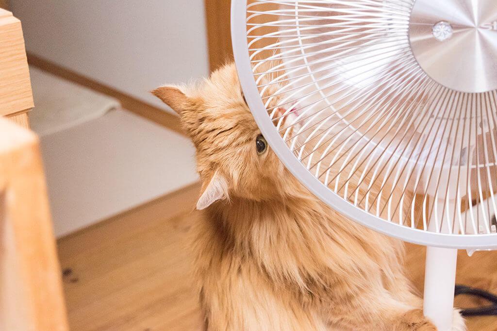 チイ扇風機なめやめる