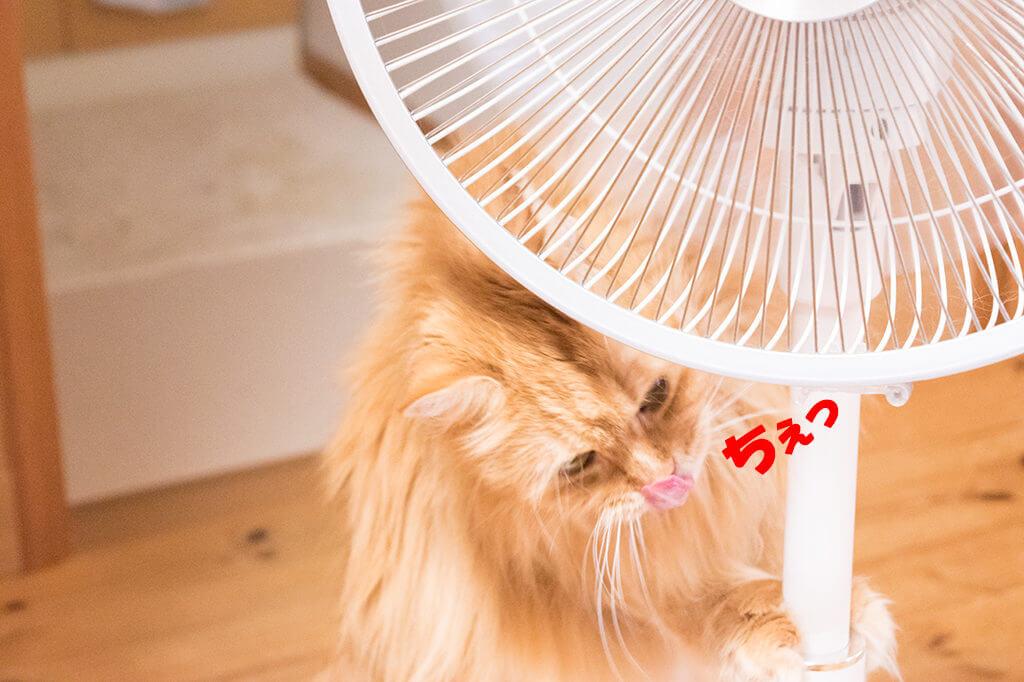 チイ扇風機からはなれる