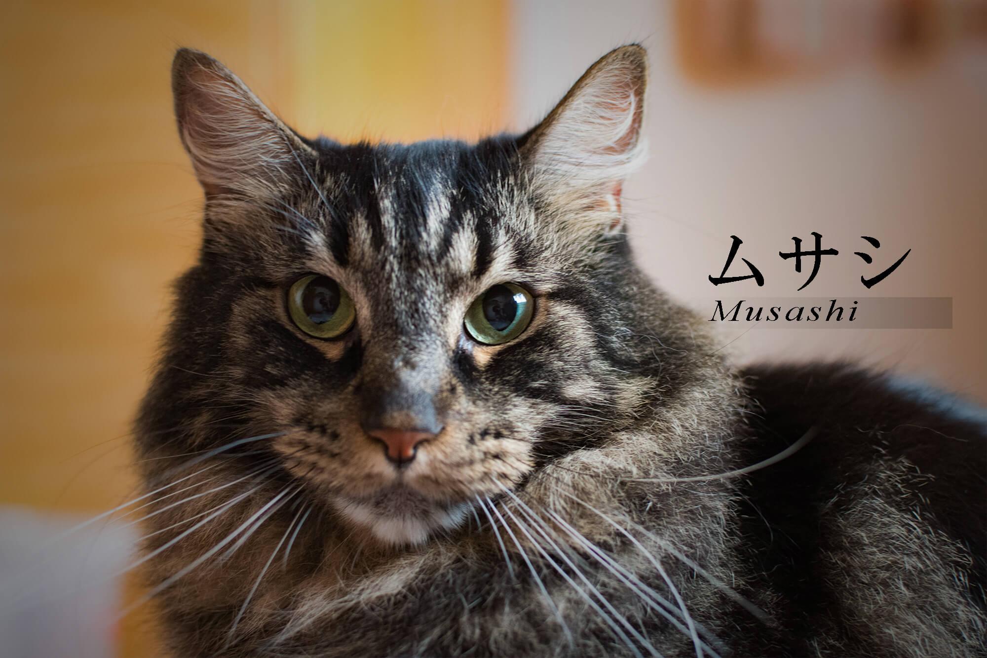 ムサシの紹介写真