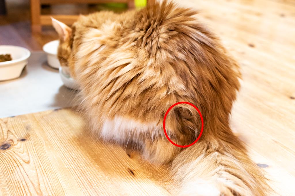 玉 猫 取り 方 毛 猫が毛玉を吐けない時は注意!毛球症対策におすすめのフード10選