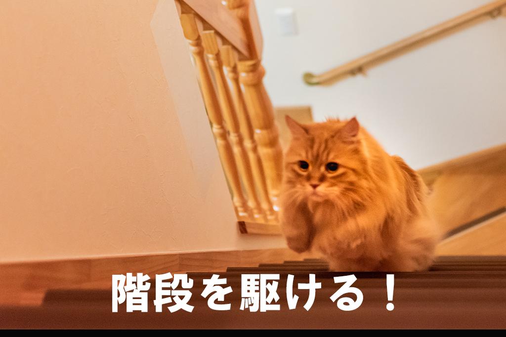 ねこ、チイ階段を駆ける