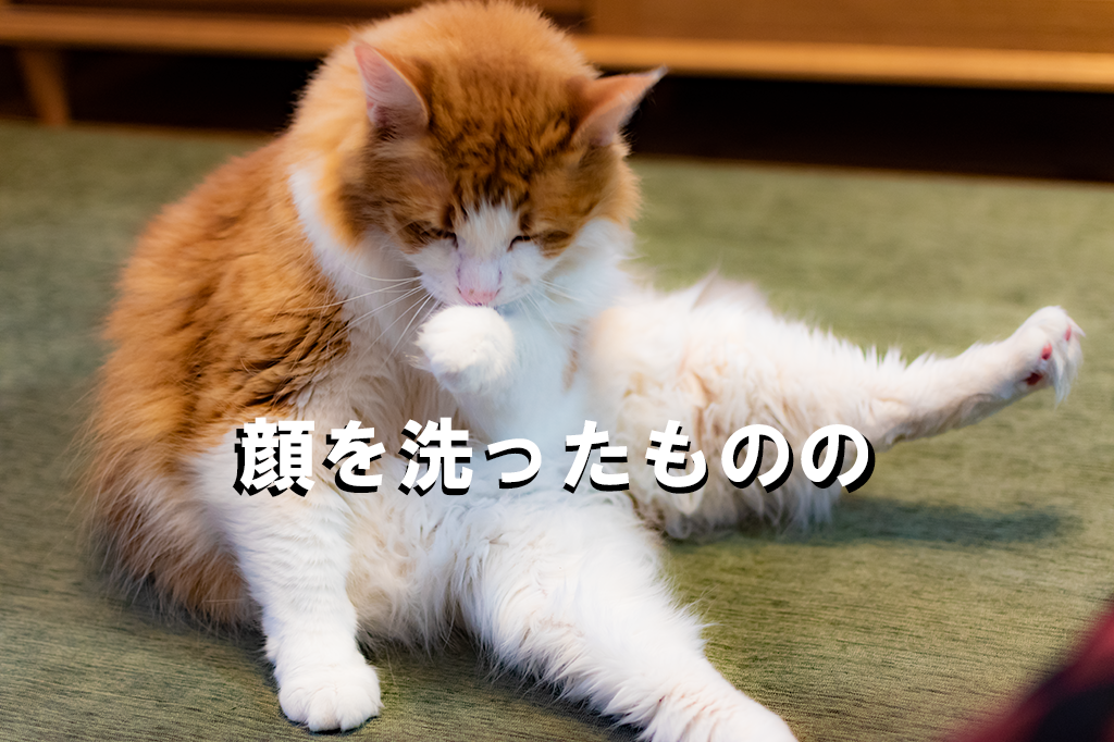 ねこ、猫、顔を洗う