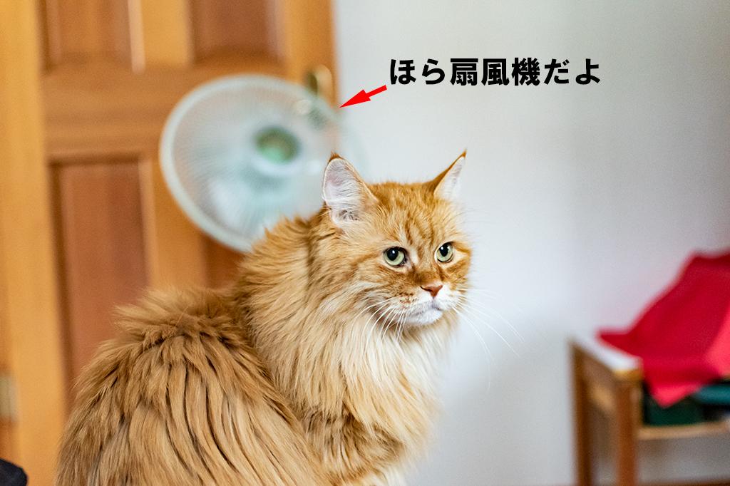 ねこ、チイの後ろに扇風機