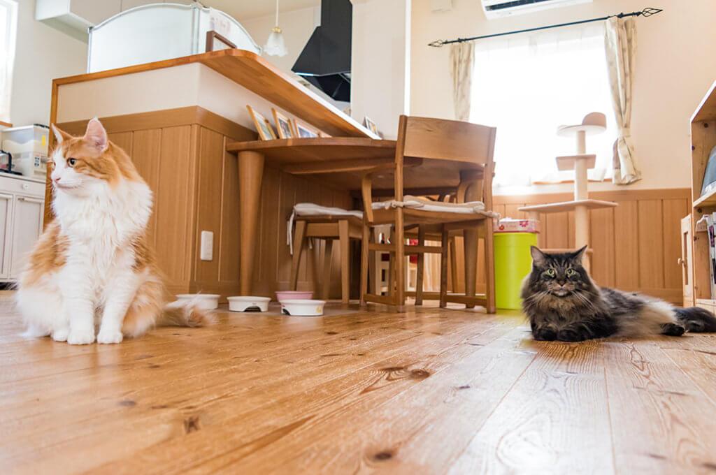 人と暮らす猫