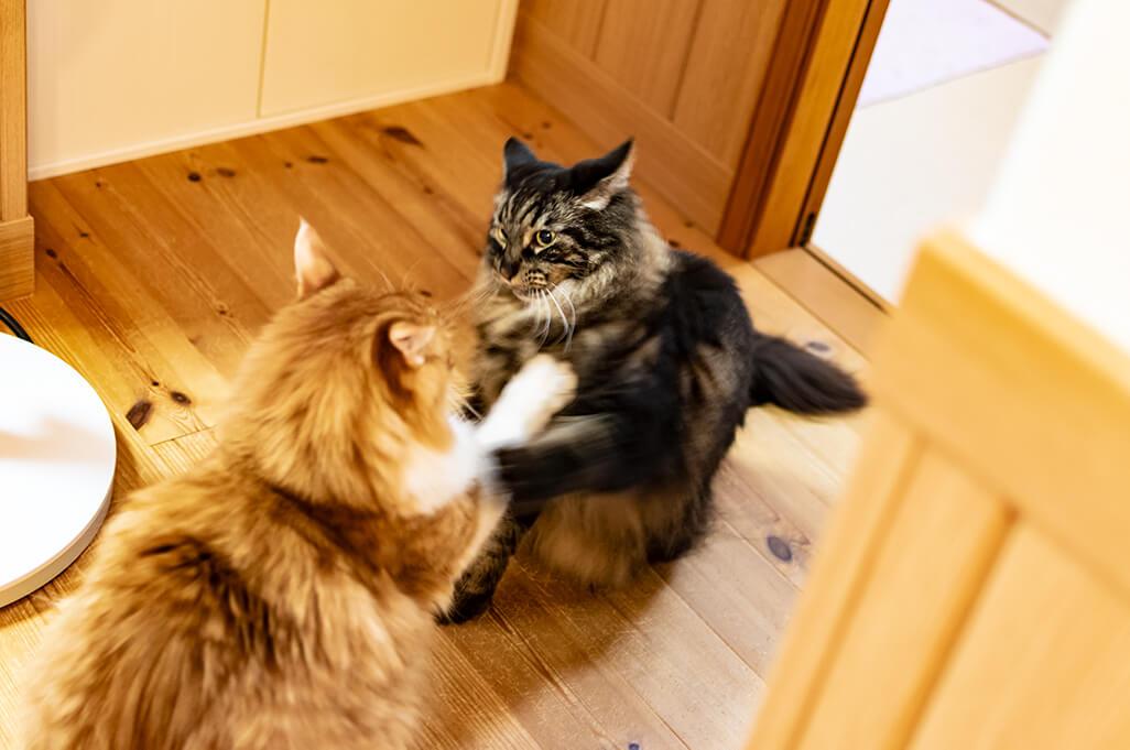 猫が喧嘩をする、ねこのケンカ