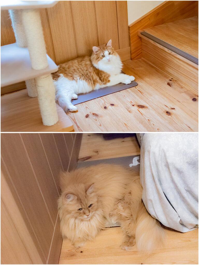 猫、ひんやりボード、コタロウとチイ