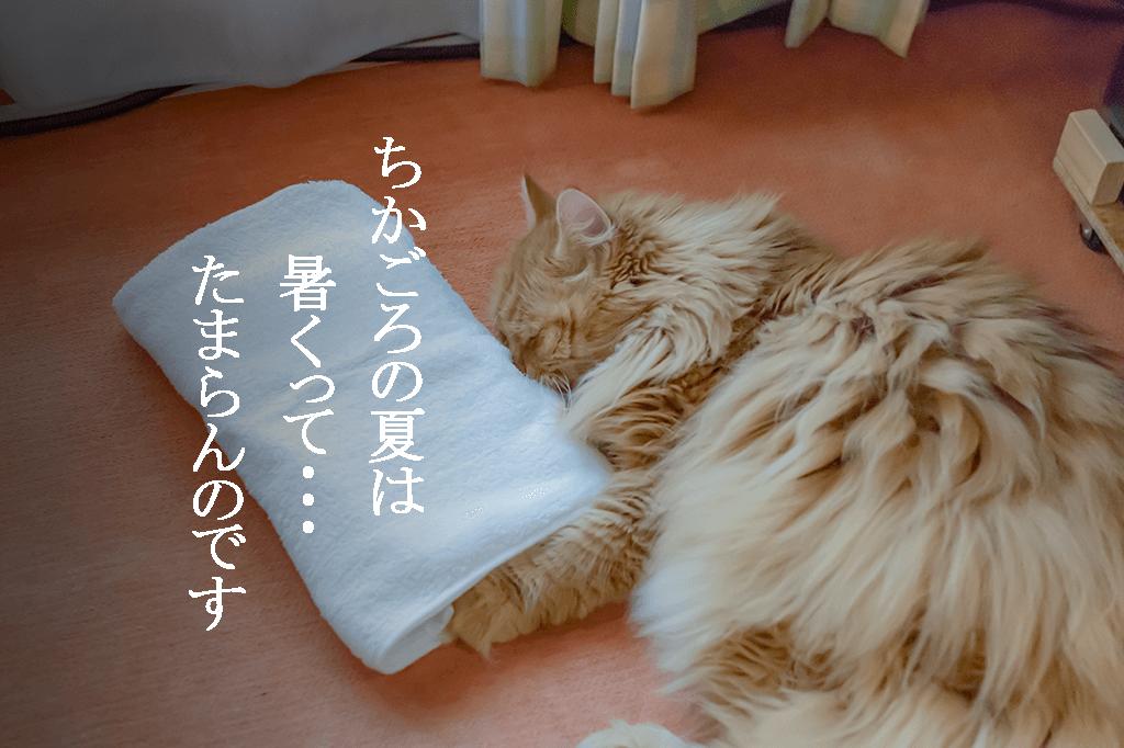 夏、猫、熱中症、ひんやりボード、アイスノン