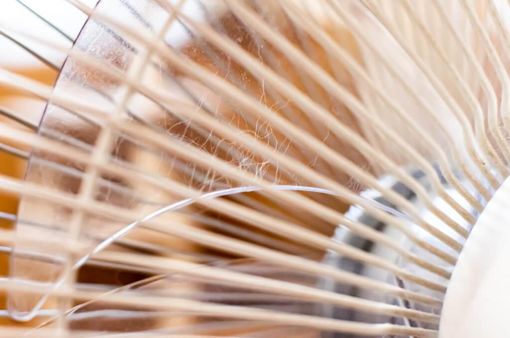 扇風機の羽根に猫の毛