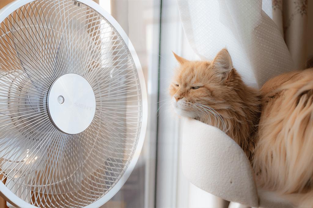 羽根の扇風機と猫、ダイソン扇風機