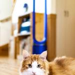ダイソン扇風機_猫との暮らし