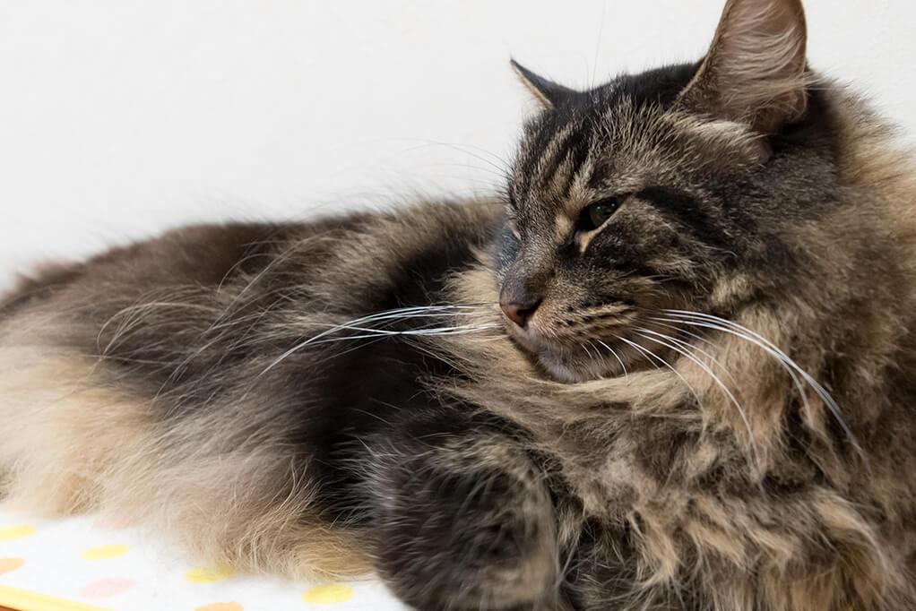 ムサシの鼻_眠いとき