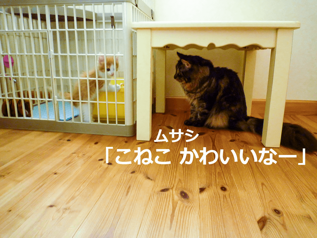 ムサシ、子猫がかわいい