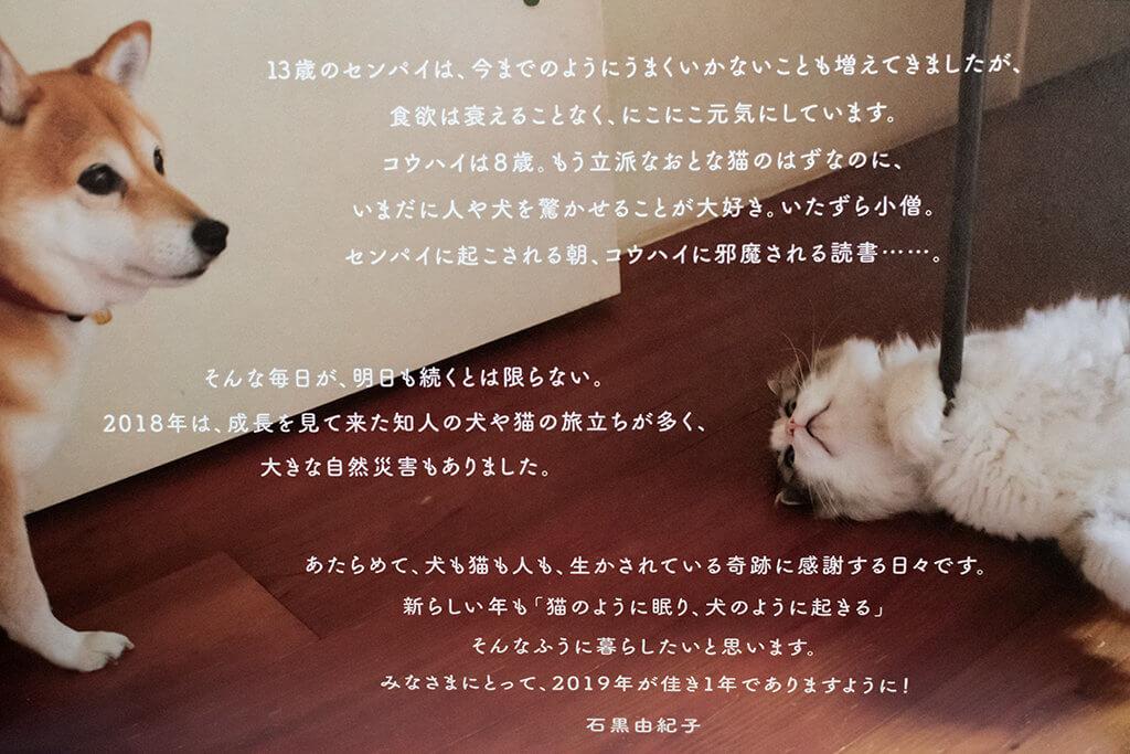豆柴センパイと捨て猫コウハイ3
