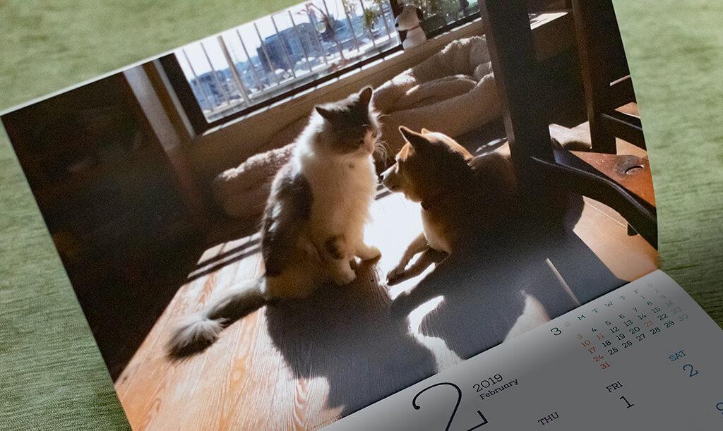 豆柴センパイと捨て猫コウハイ2