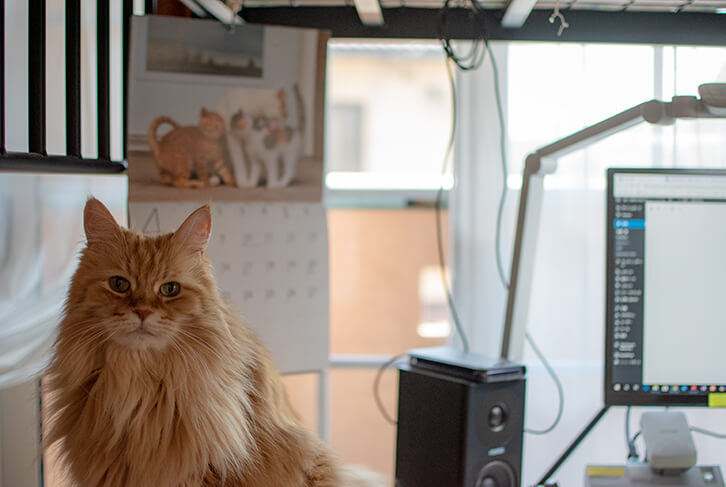 チイさん_私の机で待つ