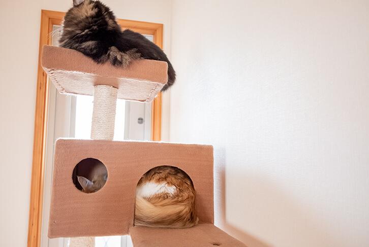 キャットタワーのハウスで寝る猫1