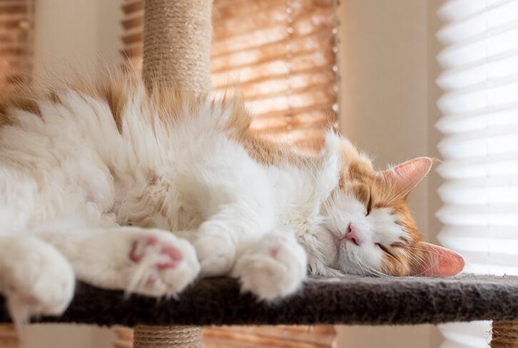 キャットタワーのステップで寝る猫3