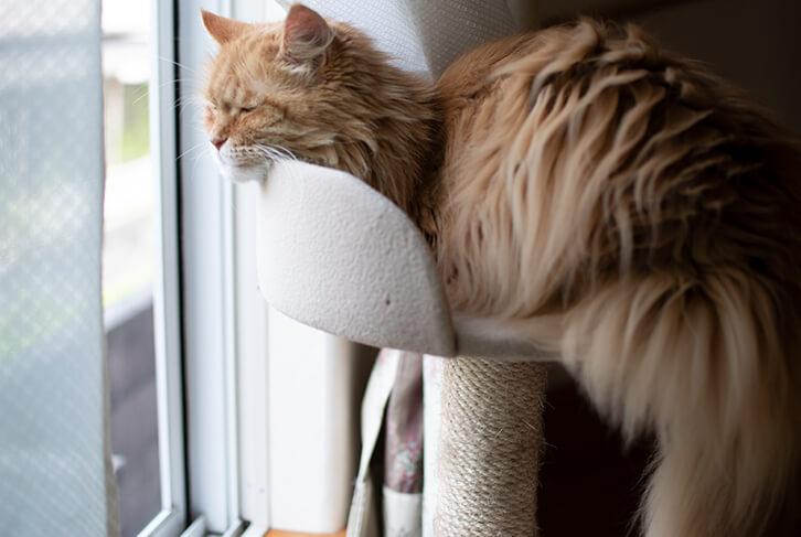 キャットタワーのベッドで寝る猫2