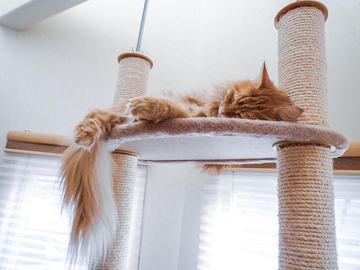 キャットタワーのステップで寝る猫1