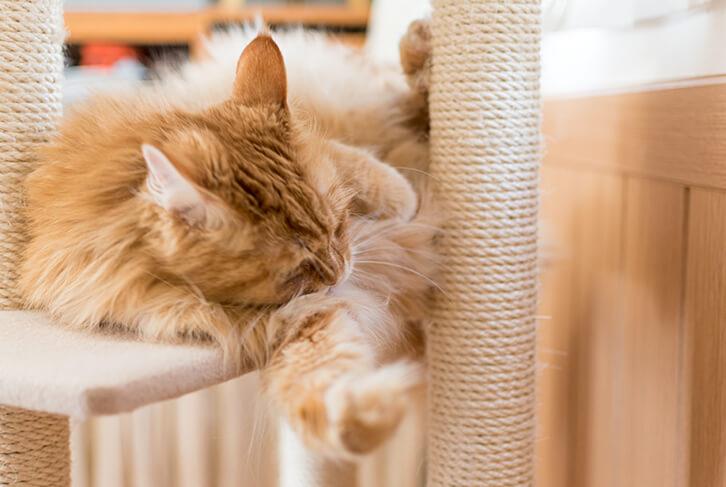 キャットタワーのステップで寝る猫2