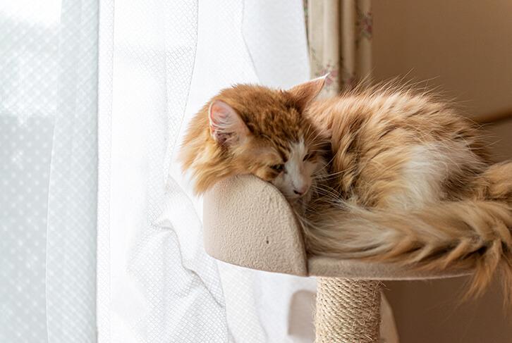 キャットタワーのベッドで寝る猫1