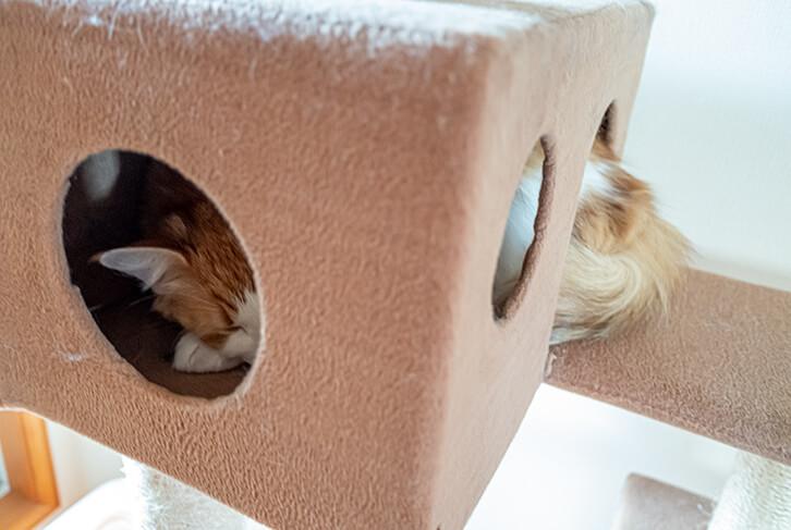 キャットタワーのハウスで寝る猫2