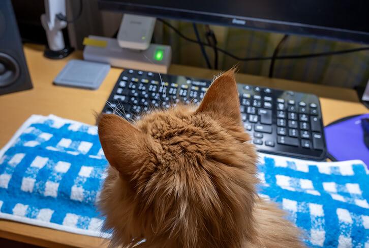 キーボードの前に猫