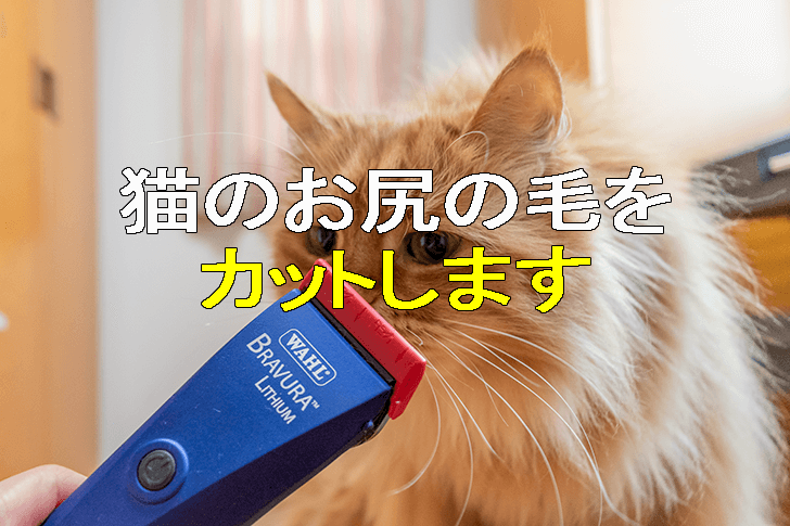 猫のお尻の毛をカット