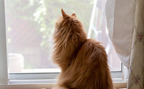 張り替え後の網戸越しに外を眺める猫