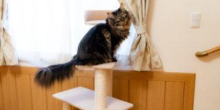 キャットタワーの補修_ポール交換_猫