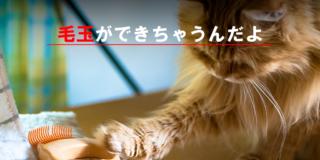 改善、対策、猫の体の毛玉